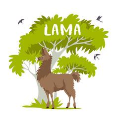 Lama and tree vector