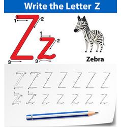 letter z tracing alphabet worksheets vector image
