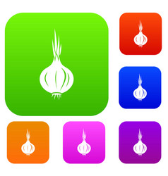 onion set collection vector image
