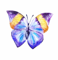Purple watercolor butterfly vector