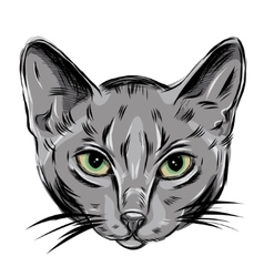 Portrait of Domestic Russian Blue Cat Cute vector image