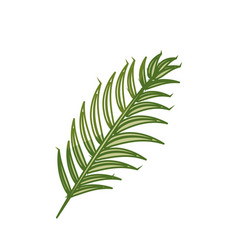 Silhouette tropical branch leaves plant vector
