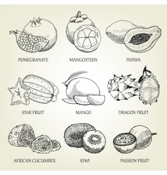 Hand drawn set of different tropical fruits vector image