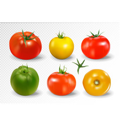 realistic of 6 different colors of tomatoes vector image vector image