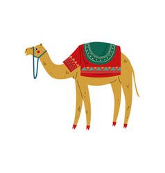 camel with saddle on back desert animal vector image