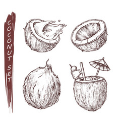 coconut fruit coconut milk juice cocktail sketch vector image