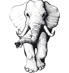 Elephant front view vector