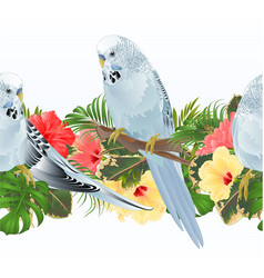 tropical border seamless background budgerigars vector image