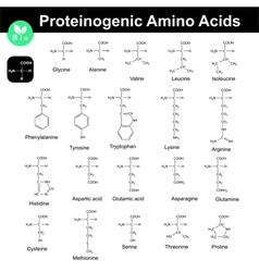 Main proteinogenic amino acids vector image