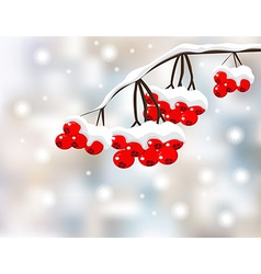 Winter background with red berries and snow vector