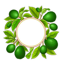 avocado branches frame on white background vector image