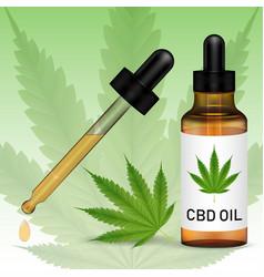 cannabidiol or cbd oil with marijuanna leaf vector image
