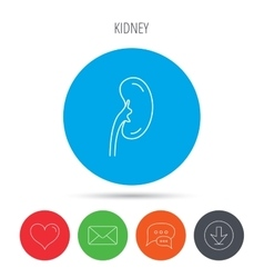 Kidney icon Transplantation organ sign vector
