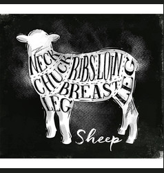 Sheep lamb cutting scheme chalk vector