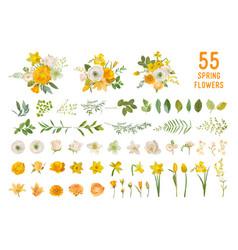 spring garden flowers yellow daffodil mustard vector image