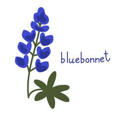 Bluebonnet flower vector