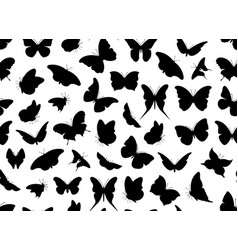 Butterfly seamless isolated vector