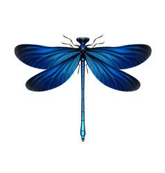 Calopteryx virgo dragonfly vector