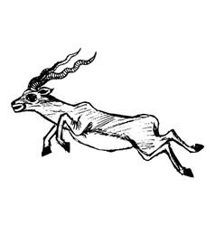 jumping antelope vector image