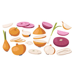 set brown and purple onions vegetable natural vector image
