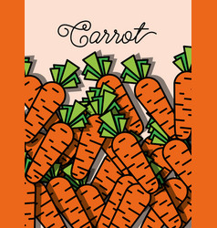 vegetable carrot fresh healthy food poster vector image