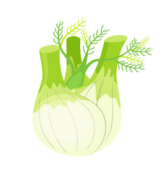 colorful fennel isolated on vector image
