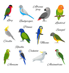 Colorful set of parrot icons vector