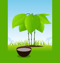 Kava plant and its juice served in wood bowl vector