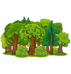 Mixed forest with trees cartoon vector