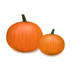 two fresh pumpkins vector image vector image