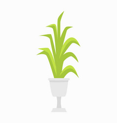 green plant in white pot on vector image