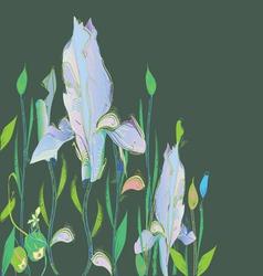 Iris vector image vector image