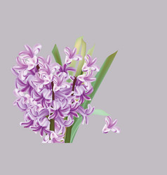 lily flowers spring season vector image vector image