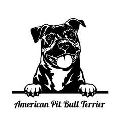 american pit bull terrier peeking dog - head vector image