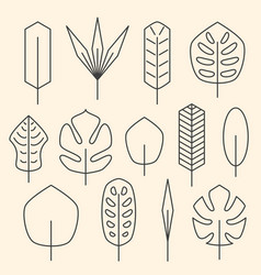 minimalistic linear palm leaf set on beige vector image