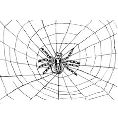 spider web texture background vector image