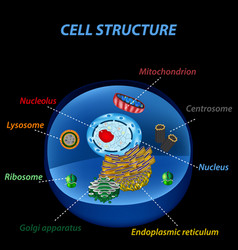 Structure human cells organelles the core vector