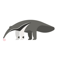 Template flat style of anteater vector