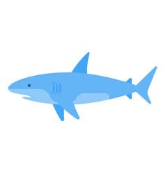 flat style of white shark vector image