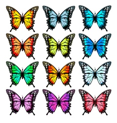 Big collection of colorful butterflies vector image vector image