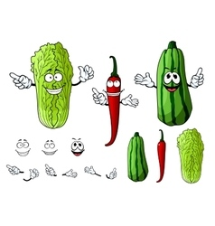 Chili pepper cabbage and zucchini vegetables vector image
