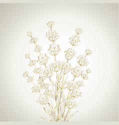 Bouquet of lavender flowers vector