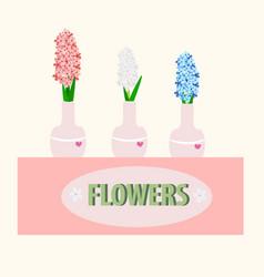 Hyacinths in a vase vector