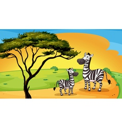 two zebra under tree vector image