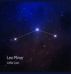 little lion leo minor constellation in the night vector image