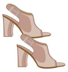 footwear feminine sandals vector image