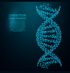 polygonal dna abstract image low poly wireframe vector image