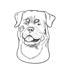 rottweiler face isolated on white background vector image