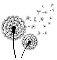 dandelion blowing black white vector image vector image