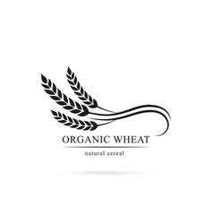 Grain logo wheat symbol vector